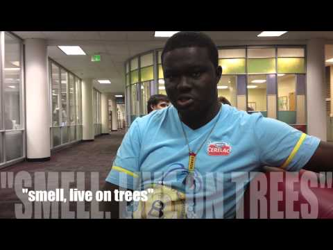 Africans vs. African Americans, United or Divided Pt. 1