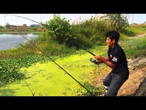 ตกปลา Big ชะโด อุปสรรคใต้น้ำ
