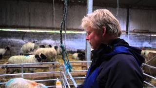 Hill Sheep Farmers and Walkers in the West of Ireland