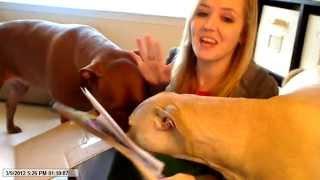 Only Natural Pet - Dog Bone Haul