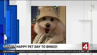 Celebrating National Pet Day