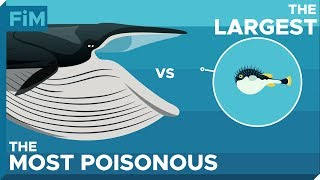 What If a Whale Swallowed a Poisonous Pufferfish?  Tetrodotoxin explained