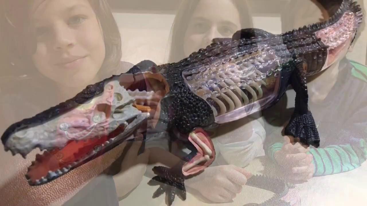 Anatomía de un cocodrilo 4D VISION CROCODILE - YouTube