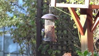 Birds Feeding From Bird Feeder
