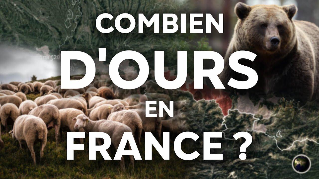 L'ours dans les Pyrénées, état de conservation, impact sur l'élevage...