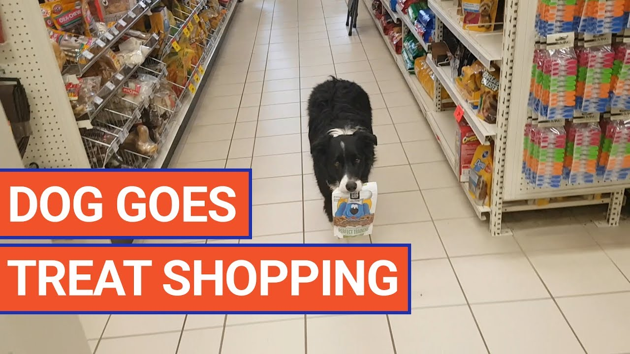 Dog Picks Out His Own Treats Pet Video Daily Heart Beat - Every day this dog goes shopping all by himself to get treats