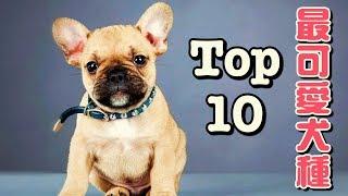前十大最可愛的狗狗品種「寵物大機密」