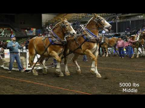 2016 Farm Fair International Horse Pulls