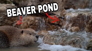 Justin Beaver of THE DODO Gets a New Pond!!