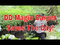 DD Magic Carpet Saves The Day! 🌈