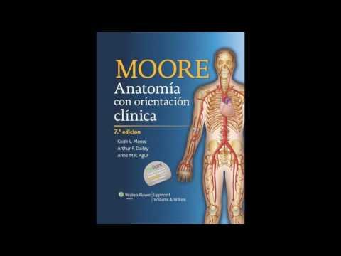 ANATOMIA DE MOORE ULTIMA EDICION - Full download