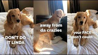 Teaching My Dog How to Speak