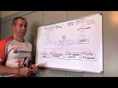 HIIT vs Endurance training