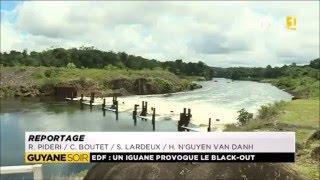 EDF et l'iguane, la Guyane que j'aime !