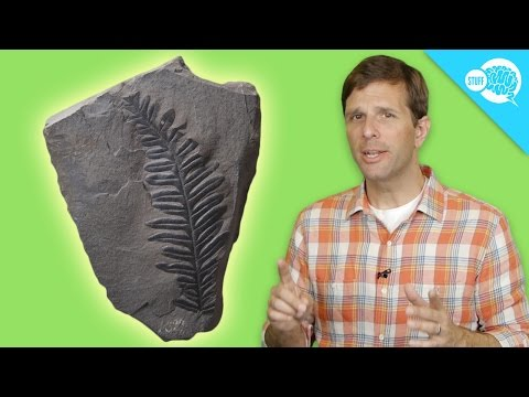 Radiocarbon dating explained - Everything Explained Today