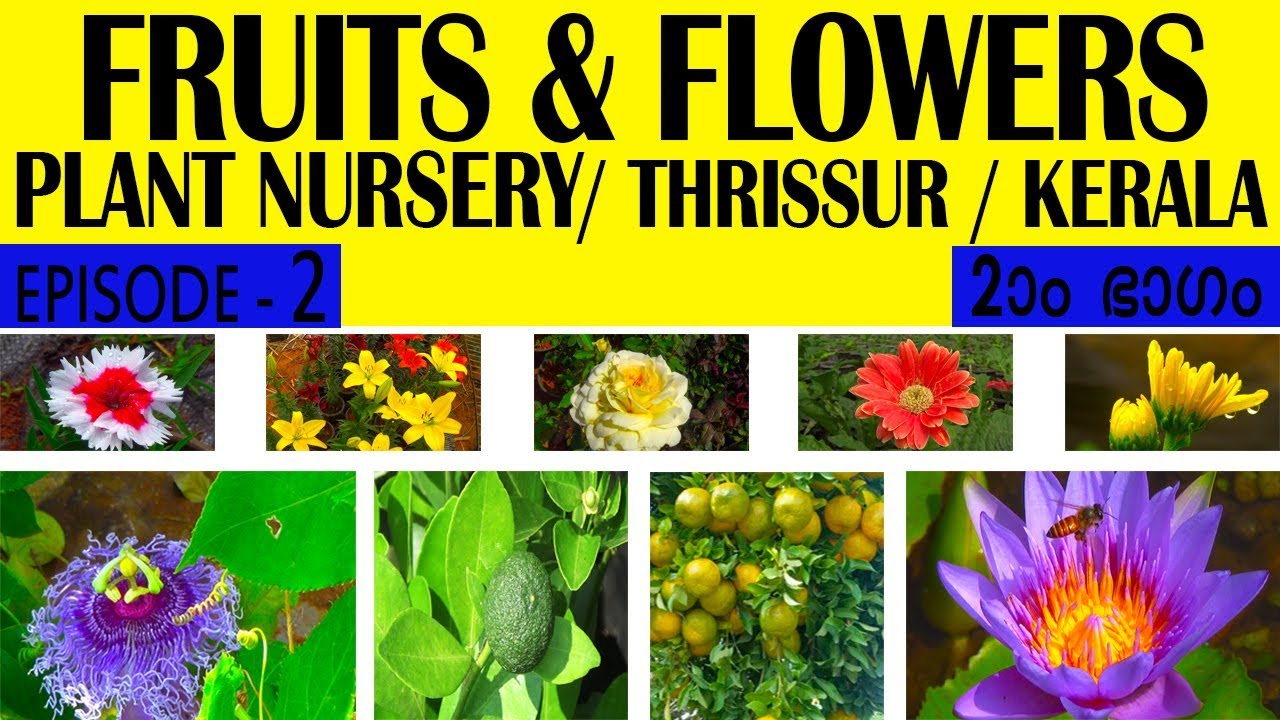 FRUITS AND FLOWERS PLANT NURSERY THRISSUR KERALA INDIA PART 2