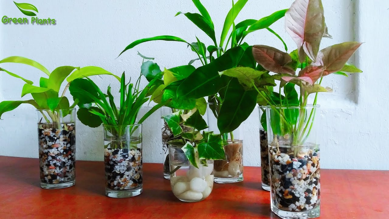How to Make Indoor Water Garden   Indoor Water Plants Garden   Grow Plants  in Water//GREEN PLANTS