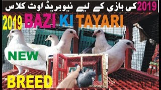 KABOOTAR BAZI KI TYARI 2019 || NEW BREED READY || OUT CLASS BREED