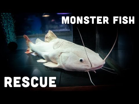 home-of-the-biggest-monster-fish-on-youtube-[ohio-fish-rescue]
