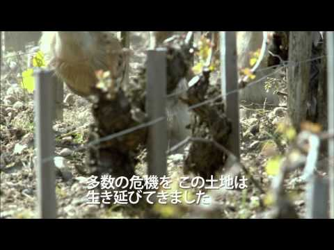 世界一美しいボルドーの秘密(字幕版) (予告編)