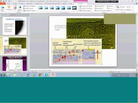 2nd IACLE Regional Webex Lecture: Oxygen and its implicancies in CL wear Neira - Colombia
