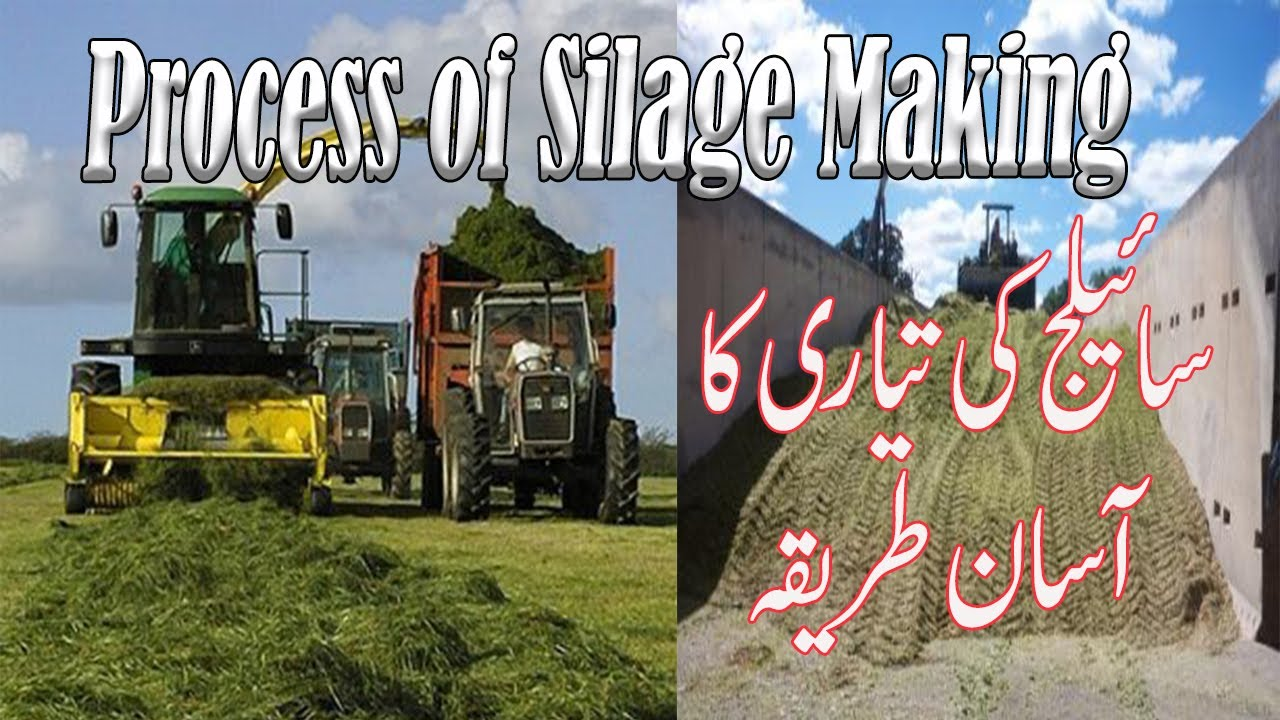 Download The process of silage making