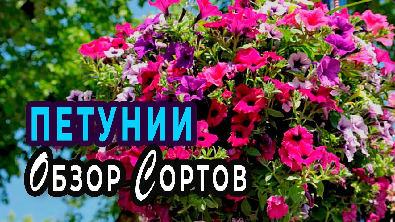 Новинки семян петуний на сезон 2021. Часть 2.