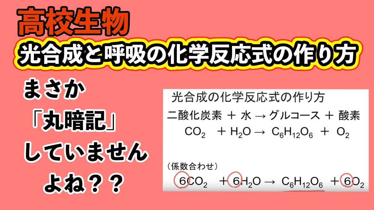 式 反応 光合成 化学