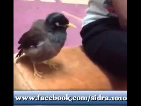 Speaking Bird                  Masha...