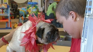 Paws Across Texas Brings Joy To Patients - Red Balloon Network Spotlight