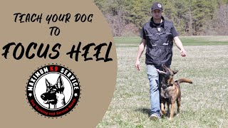 Teach Your Dog To FOCUS HEEL | Maximum K9 Service
