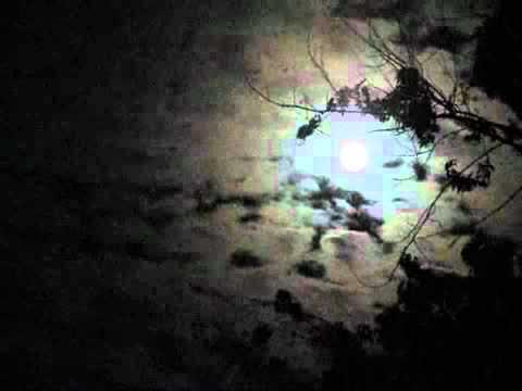 "Cowboy Junkies: ""Shining Moon"""