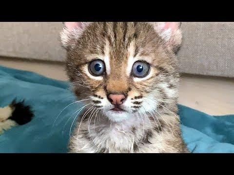 bobcat-got-a-name