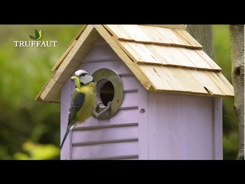 quand nourrir les oiseaux du jardin jardinerie truffaut tv youtube. Black Bedroom Furniture Sets. Home Design Ideas
