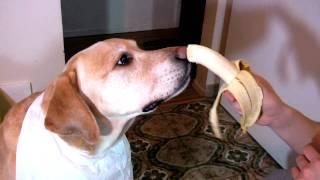 bananas are yummy