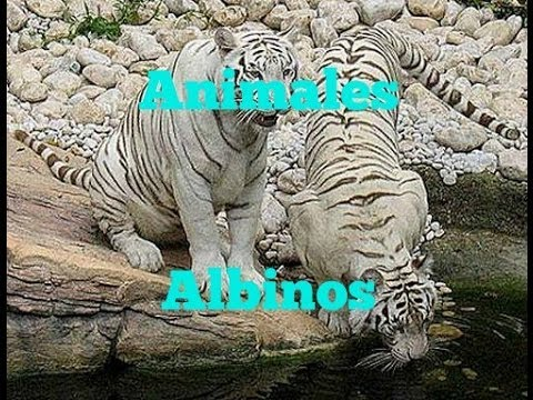 animales albinos - photo #48