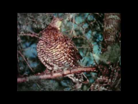 """Spruce Bog""- Best 16mm Time Lapse National Film Board Documentary (1956)"