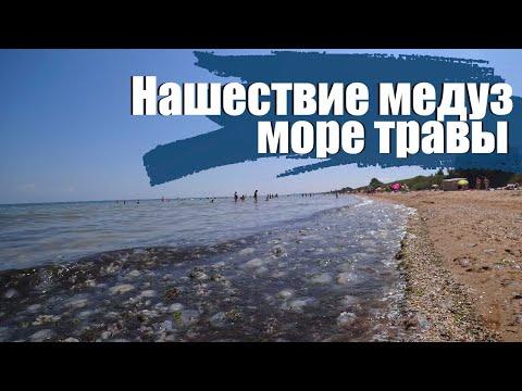 КУЧУГУРЫ  - нашествие медуз на Азовском море.