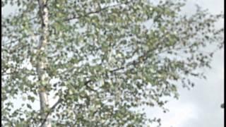 Пес Барбос и необычный кросс. Самогонщики - Trailer