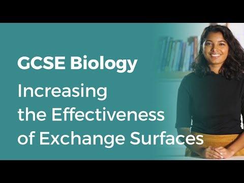 Increasing the Effectiveness of Exchange Surfaces | 9-1 GCSE Biology | OCR, AQA, Edexcel