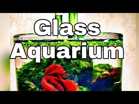 Betta Tank | Lucky Bamboo Plants Setup In Small Glass Aquarium