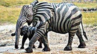 10 Невероятных Животных, о Которых Вы Подумаете что это Фотошоп