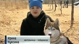 Вести-Хабаровск. Опять травят собак