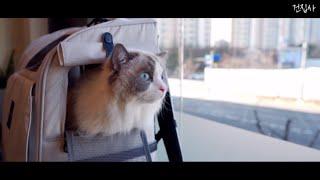 vlog)고양이 1년에 한번 종합백신 + 광견병 주사 …