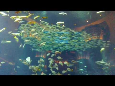 Shoaling & Schooling Of Fish