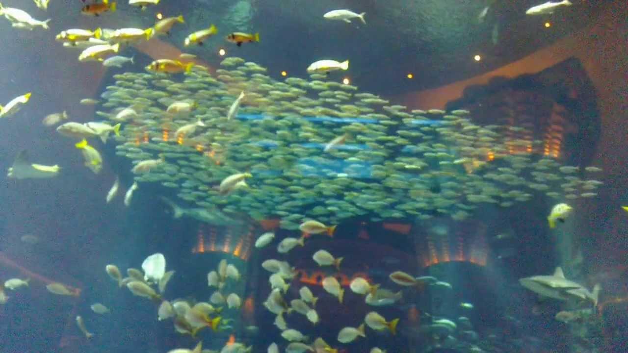 Shoaling Schooling Of Fish