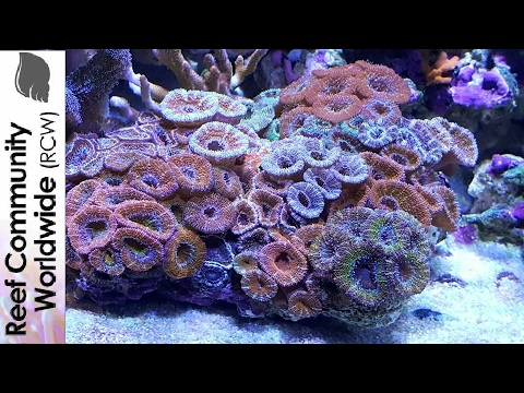 how to raise nitrates in reef tank