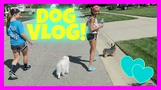 Our Family Of Vloggers...even The Dogs!