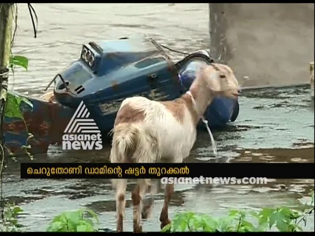 Domestic animals also messed up with the Cheruthoni shutter opening