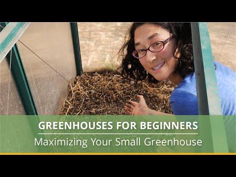 Greenhouse Gardening 101: A Beginner's Guide